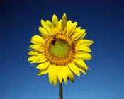 Солнце:  плюсы и минусы.