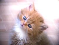 Как выбрать котенка и где его взять?
