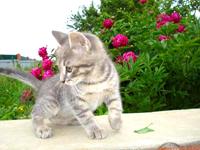 Здоровье котенка